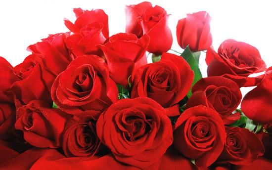 Hermosa postal de rosas rojas