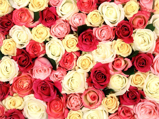 Postal de rosas