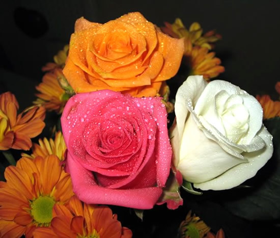 Tres rosas diferentes