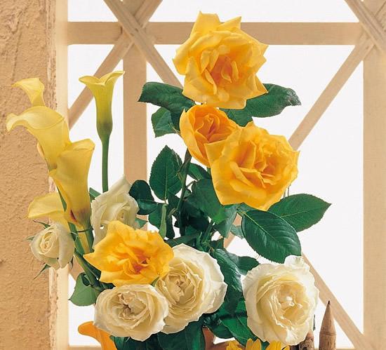 Cuadro de rosas amarillas