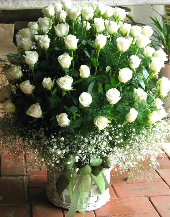 Bonita postal de rosas blancas