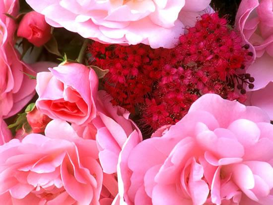 Rosas y flores de color rosado