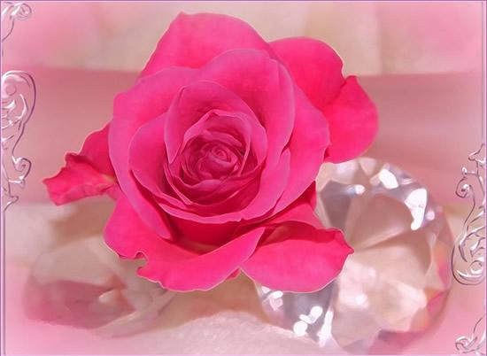 Hermosa rosa entre diamantes