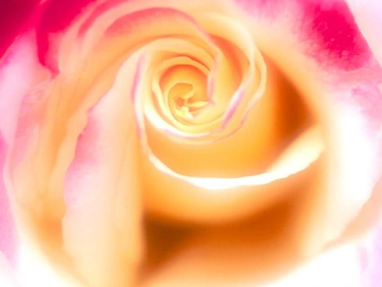 Bonito dibujo de una rosa