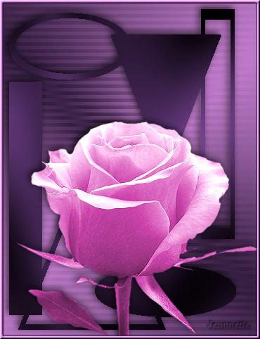 Postal de rosa