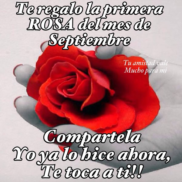 Te regalo la primera rosa del mes de Septiembre