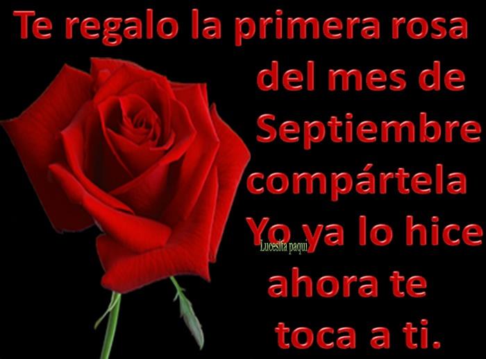 Te regalo la primera rosa de mes de Septiembre