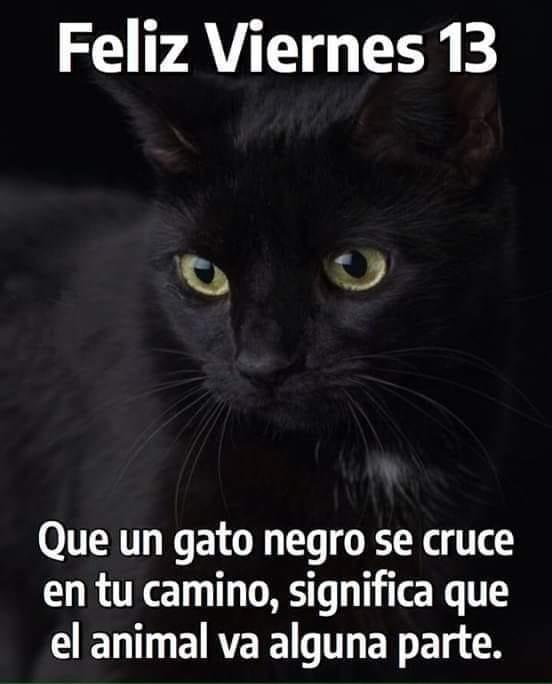 Feliz Viernes 13. Que un gato negro se...