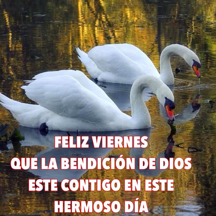 Feliz Viernes! Que la bendición de Dios este contigo es este hermoso día